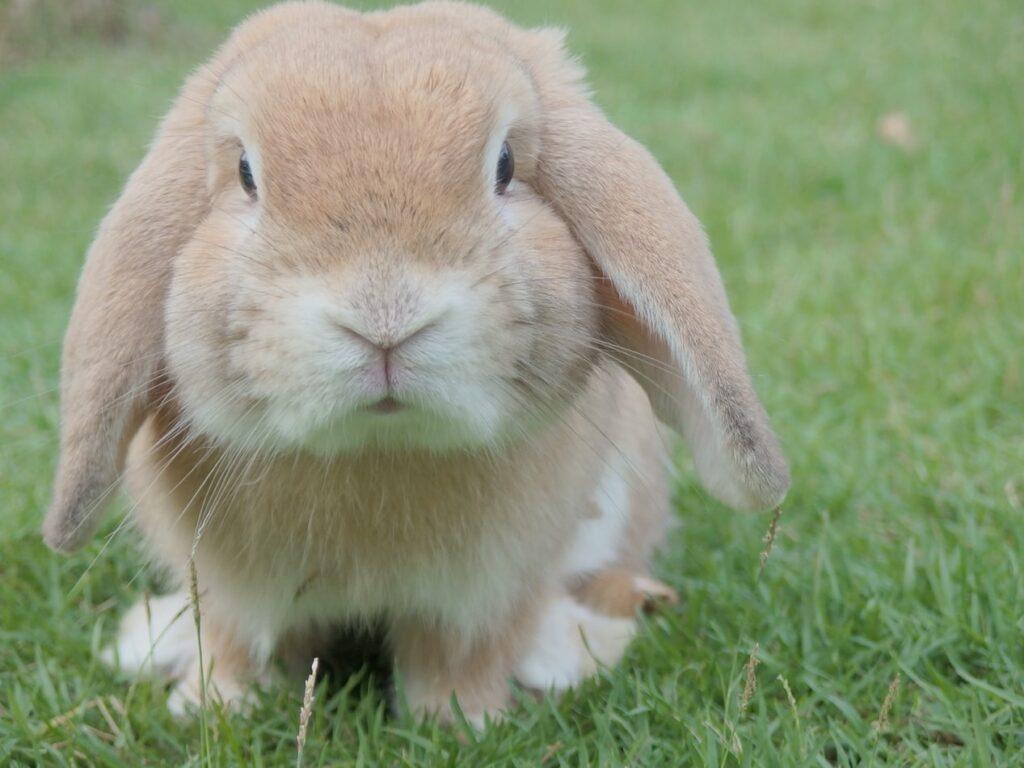 Conejo en un prado.